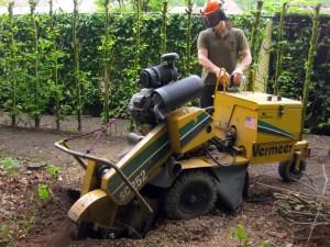 verwijderen boomstronk